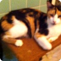 Adopt A Pet :: Miss Ashlee - Cocoa, FL