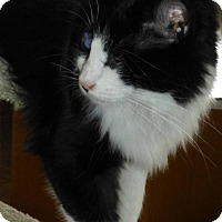 Adopt A Pet :: Cash - Prescott, AZ