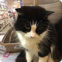 Adopt A Pet :: Vera - McDonough, GA