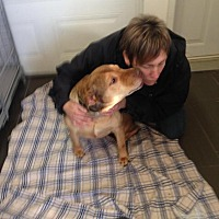 Shar Pei Mix Dog for adoption in Cornwall, Ontario - Gumbo
