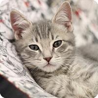 Adopt A Pet :: Earl - Sacramento, CA