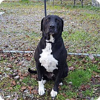 Adopt A Pet :: DUKE - Greensboro, NC