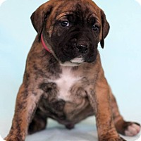 Adopt A Pet :: Aline - Waldorf, MD