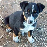 Adopt A Pet :: Talia - Waller, TX