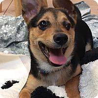 Adopt A Pet :: Squeeky - Boca Raton, FL