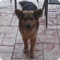 Adopt A Pet :: Tay - oakland park, FL