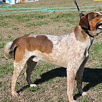 Adopt A Pet :: Don - Brattleboro, VT
