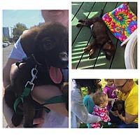 Adopt A Pet :: Moock - MCLEAN, VA
