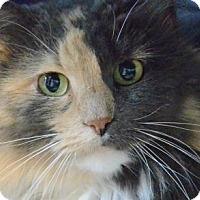 Adopt A Pet :: Olivia - Verona, WI