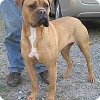 Adopt A Pet :: Kasha - Roy, WA