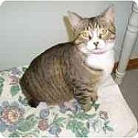 Adopt A Pet :: Igloo - Hamburg, NY