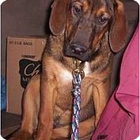 Adopt A Pet :: Duke - Allentown, PA