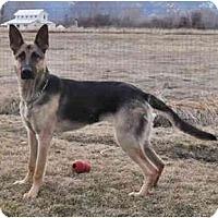 Adopt A Pet :: Gidget - Hamilton, MT