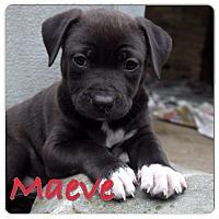 Adopt A Pet :: Maeve - Baton Rouge, LA