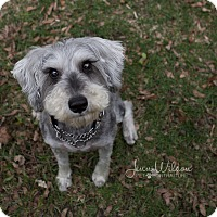 Adopt A Pet :: Digby - Drumbo, ON