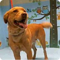 Adopt A Pet :: Lila Bean - Seattle, WA