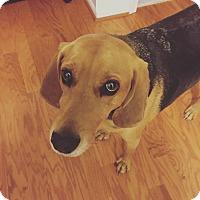 Adopt A Pet :: Doug - Manassas, VA