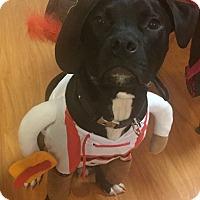 Adopt A Pet :: Sampson - Woodland, CA