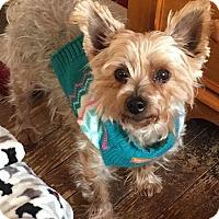 Adopt A Pet :: Tallulah - Mount Laurel, NJ