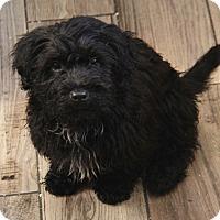 Adopt A Pet :: Bangle - Yuba City, CA