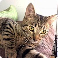 Adopt A Pet :: Al - Lombard, IL