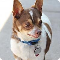 Adopt A Pet :: Chico - Yukon, OK