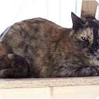 Domestic Shorthair Cat for adoption in Winnsboro, South Carolina - Alice