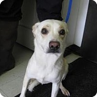 Adopt A Pet :: Bonnie - Rocky Mount, NC