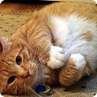 Adopt A Pet :: Hiccup - Alexandria, VA