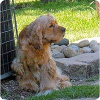 Adopt A Pet :: Winston - Menomonee Falls, WI