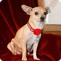 Adopt A Pet :: Buttercup - Seattle, WA