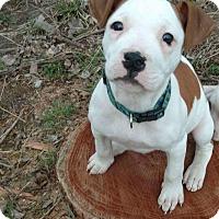 Adopt A Pet :: Laila - Dayton, OH