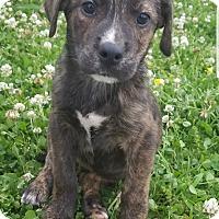 Adopt A Pet :: Enzo meet me 6/2 - Manchester, CT