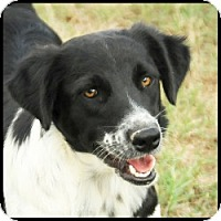 Adopt A Pet :: Fluffy - Quinlan, TX