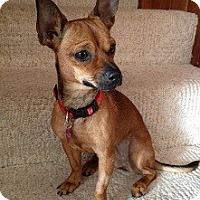 Adopt A Pet :: Stella - Hamilton, ON