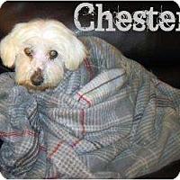 Adopt A Pet :: chester - Plainfield, CT
