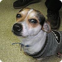 Adopt A Pet :: Ricky - McLoud, OK