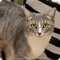Adopt A Pet :: Katie - Fountain Hills, AZ