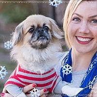 Adopt A Pet :: Gizmo - Dallas, TX