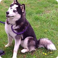 Adopt A Pet :: Ivan - Metamora, IN
