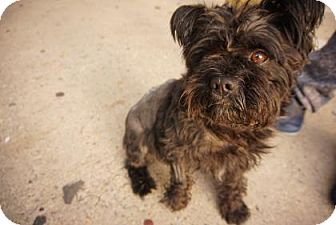 Terrier (Unknown Type, Medium) Mix Dog for adoption in Brooklyn, New York - Stingray