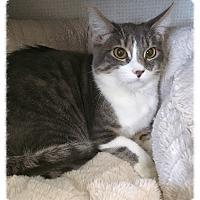 Adopt A Pet :: Princess Peach - Los Alamitos, CA