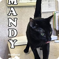 Adopt A Pet :: Mandy - Carencro, LA
