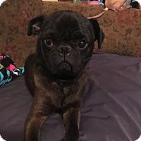 Adopt A Pet :: Vader - Hohenwald, TN