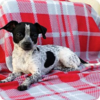 Adopt A Pet :: America - Los Angeles, CA