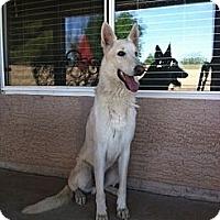 Adopt A Pet :: Vino Blanco - Gilbert, AZ