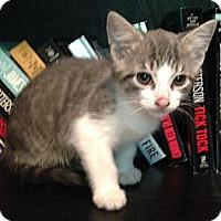 Adopt A Pet :: Gustavo - Monroe, GA