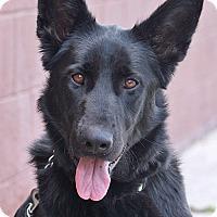 Adopt A Pet :: Leigh von Linden - Los Angeles, CA