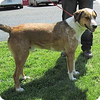 Adopt A Pet :: Bosco - Reeds Spring, MO