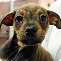 Adopt A Pet :: Rorie - Waco, TX
